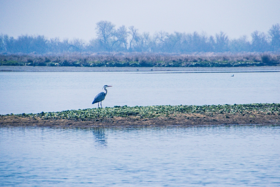 delta del po bird wacting oasi